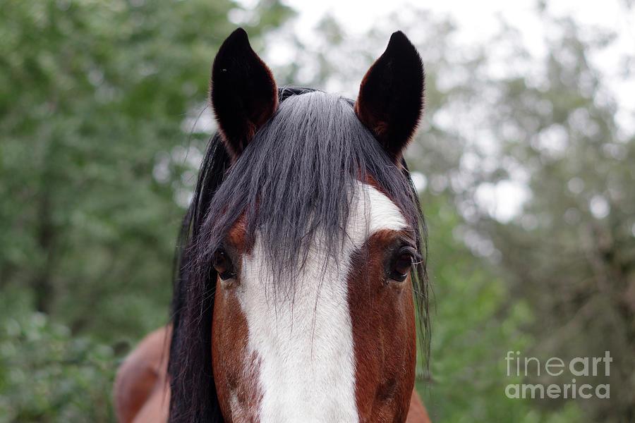 Horse Eyes Photograph