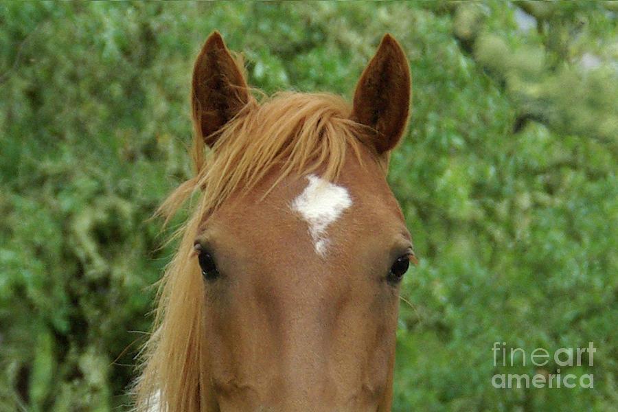 Horse Face Photograph