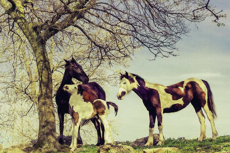 Horse Family Photograph