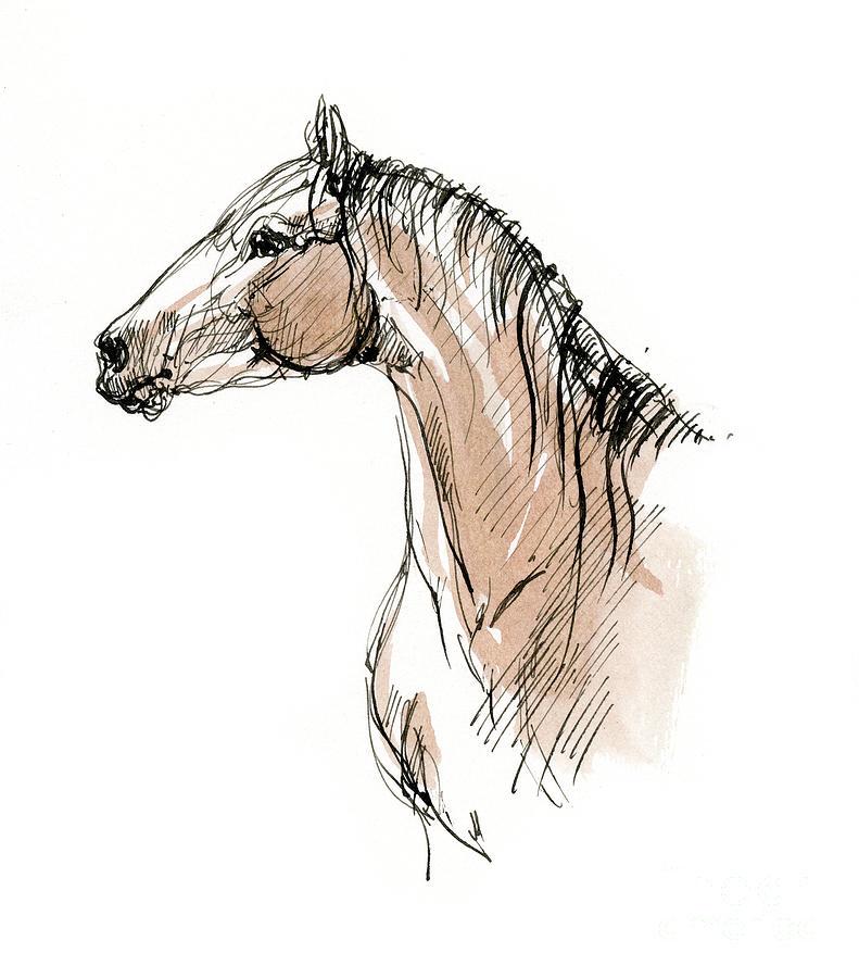 Horse head ink sketch 2019 12 02 by Angel Ciesniarska