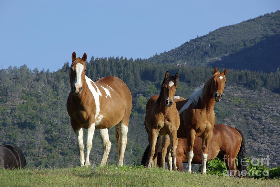 Horse Herd In Mountain Pasture Photograph