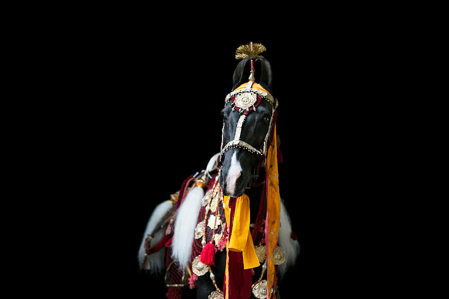 Marwari Photograph - Horse of the Kings by Picstoriesbymmk Photography