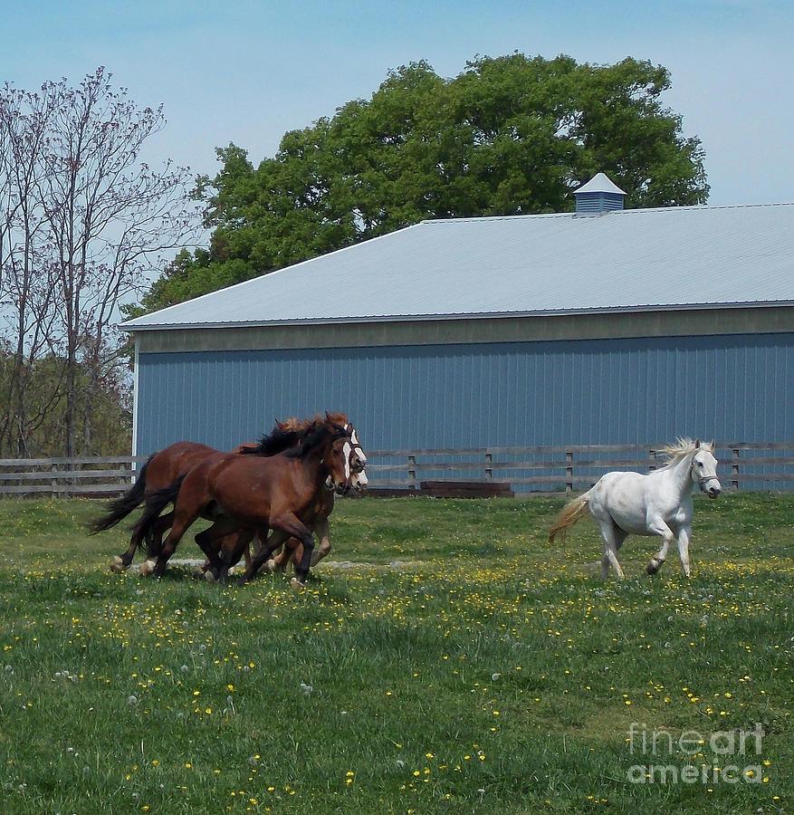 Horse Race 8x8 Photograph