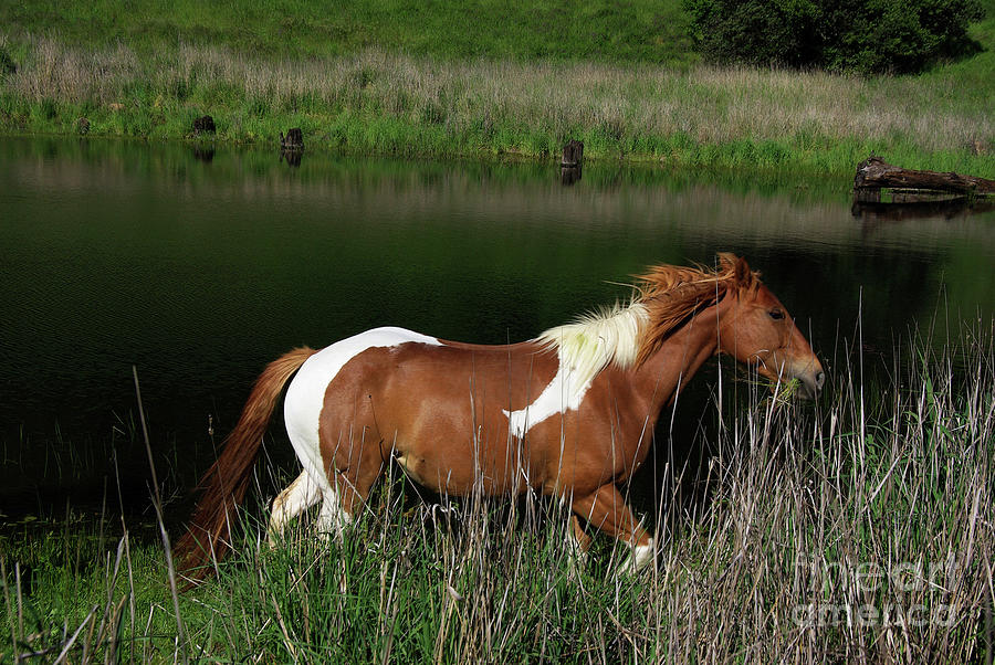 Horse Running By Pond Photograph