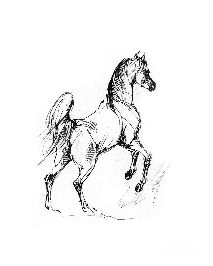 Horse Sketch 30 07 2013 Drawing By Angel Ciesniarska