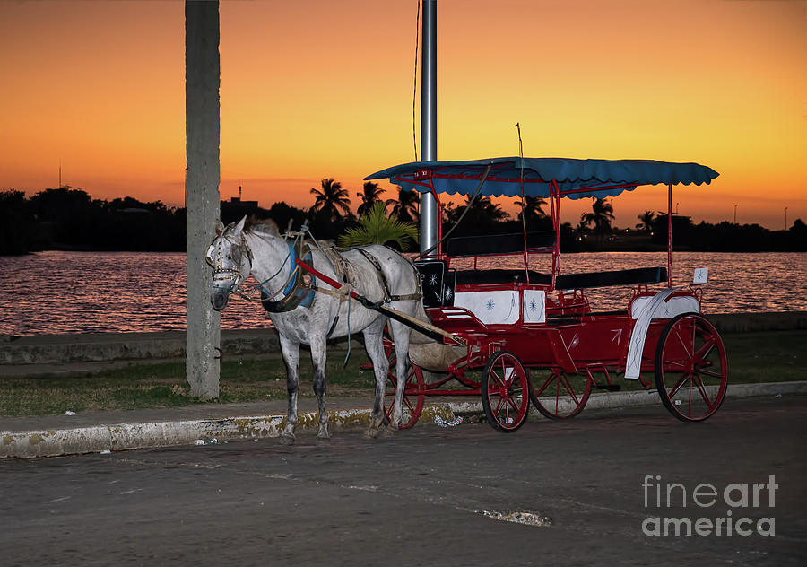 Horse with a carriage against a sunset sky  by Les Palenik