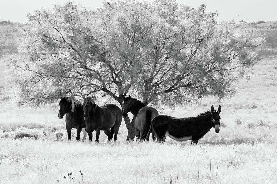 Smoke Photograph - Horses Ass by Peyton Vaughn