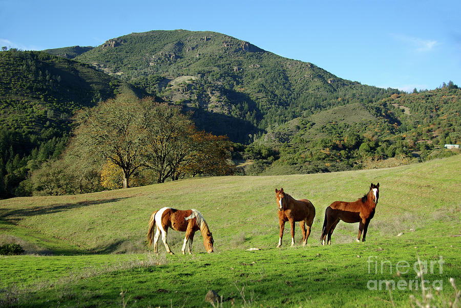 Horses Grazing On Mountain Pasture Photograph