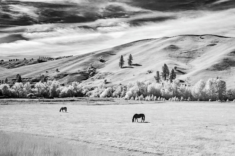 Horses in Afteroon by Harold Carlson