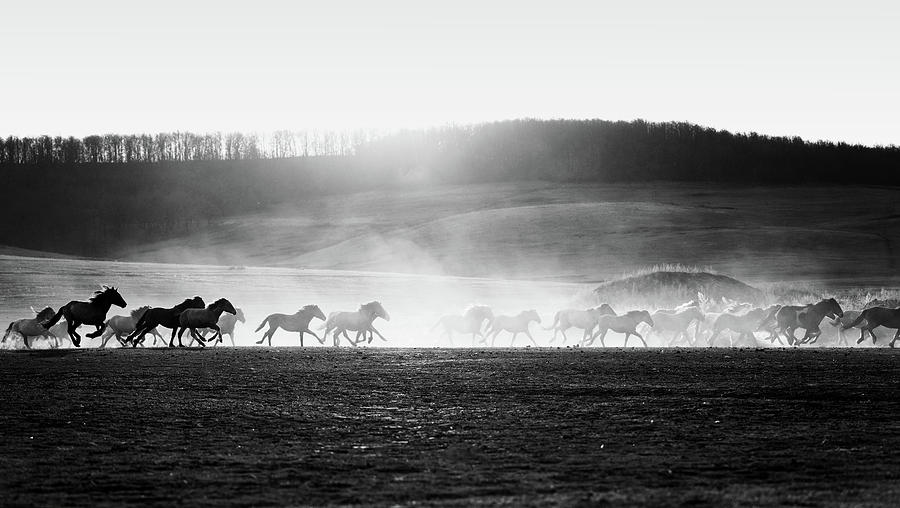 Horses in Dust and Sunset Silhouette by John Williams