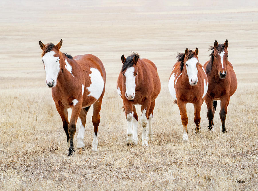 Horses on the Prairie by Judi Dressler