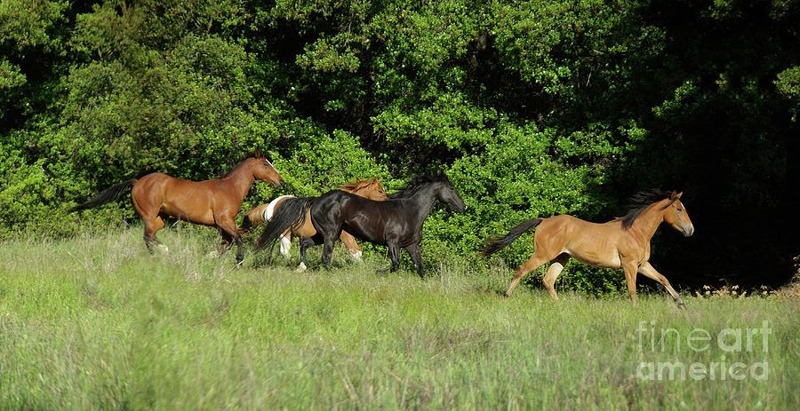 Horses Running Photograph