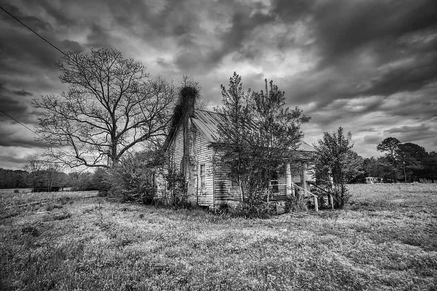 House of Trees by Daniel Brinneman