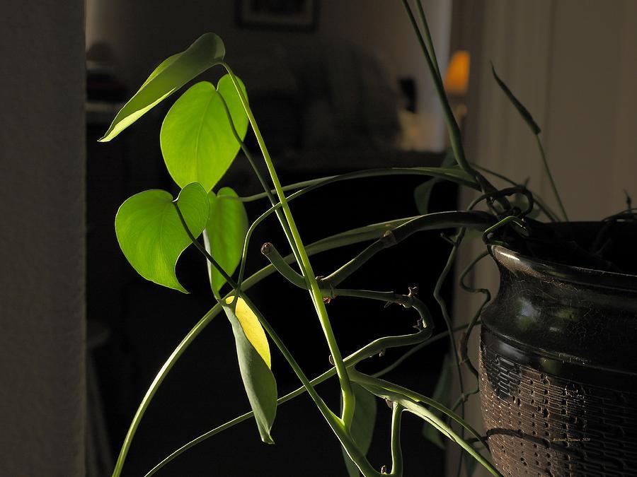 House Plant by Richard Thomas