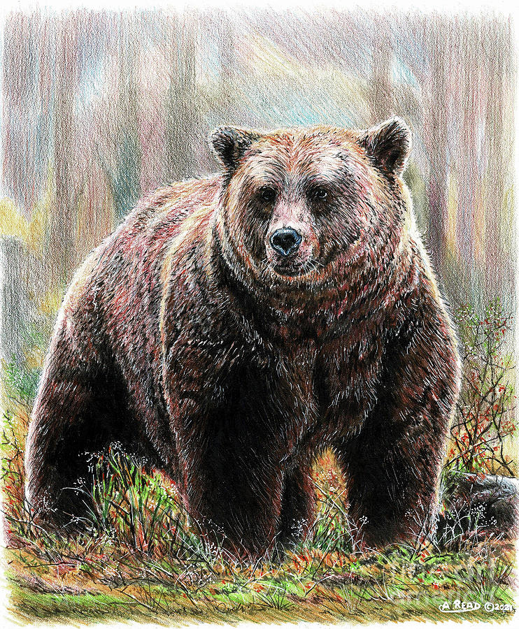 Huggy The Grizzly Bear Drawing
