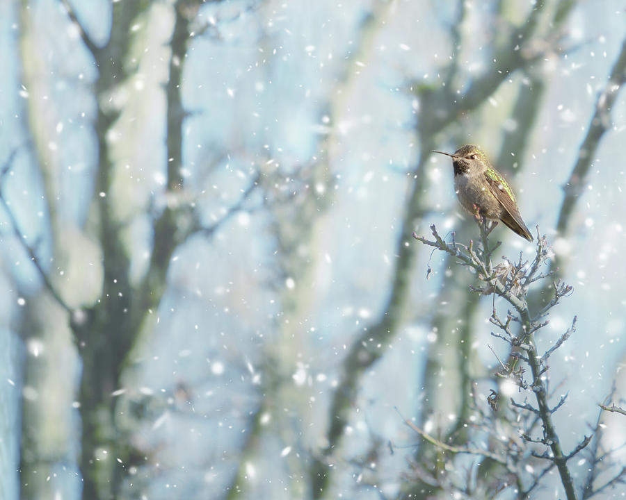 Hummer In Snow Photograph