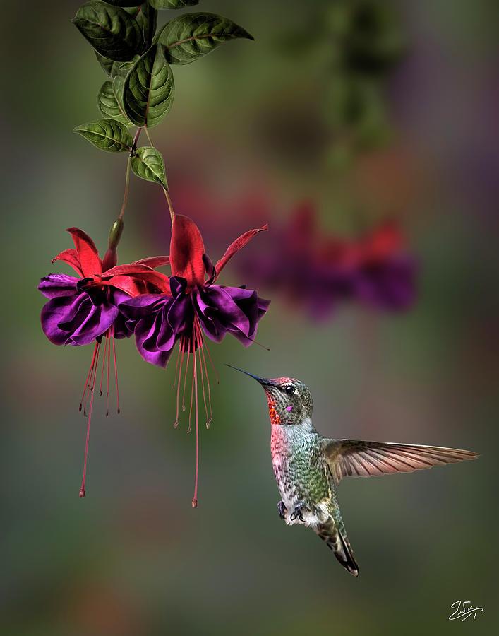 Hummingbird and Fuchsia by Endre Balogh