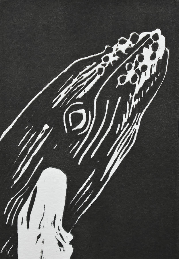 Humpback Whale Relief