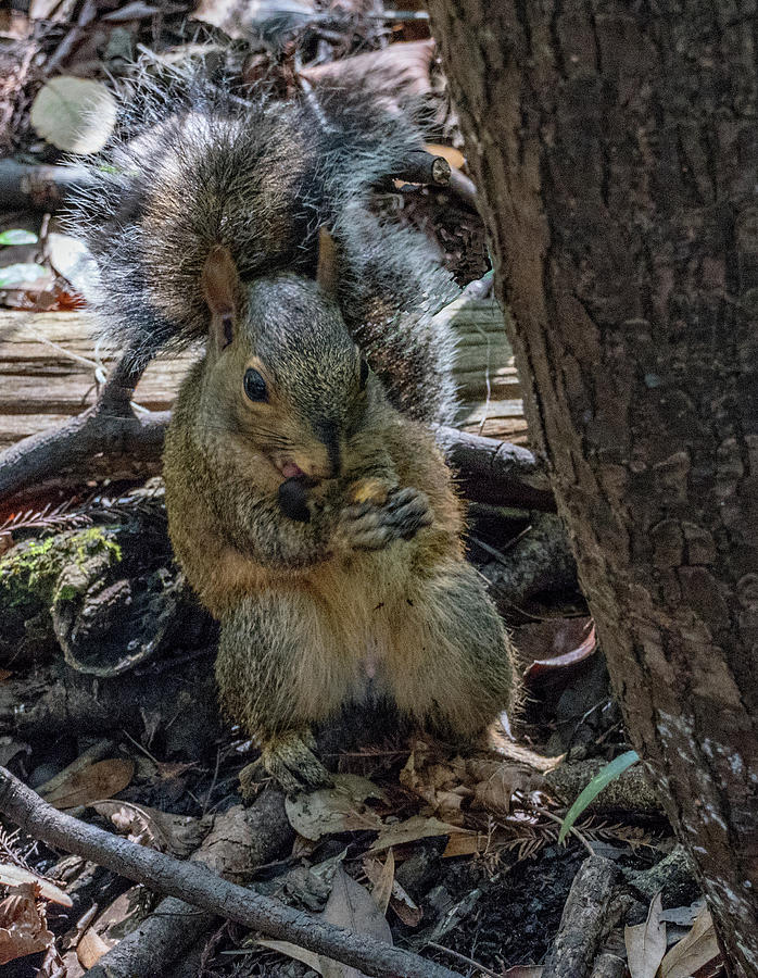 Hungry Squirrel by Margaret Zabor