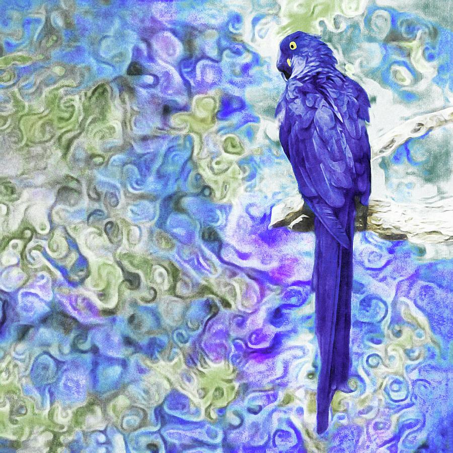 Hyacinth Macaw by Susan Maxwell Schmidt