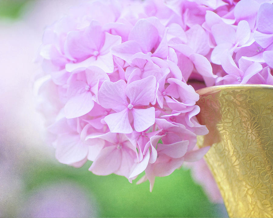 Hydrangea Still Life Photograph