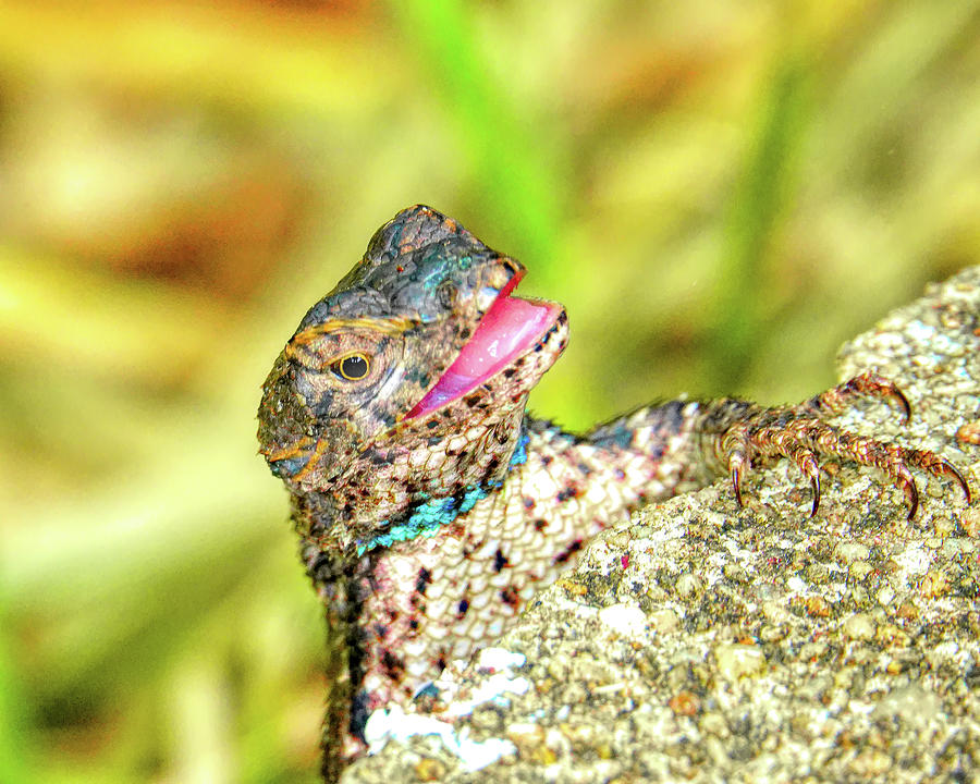 I Aint No Gecko Photograph