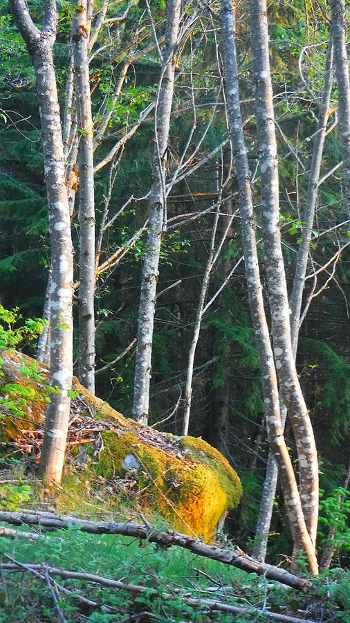 Sun Beam Photograph - I am Lichen the spot by YHWHY Vance