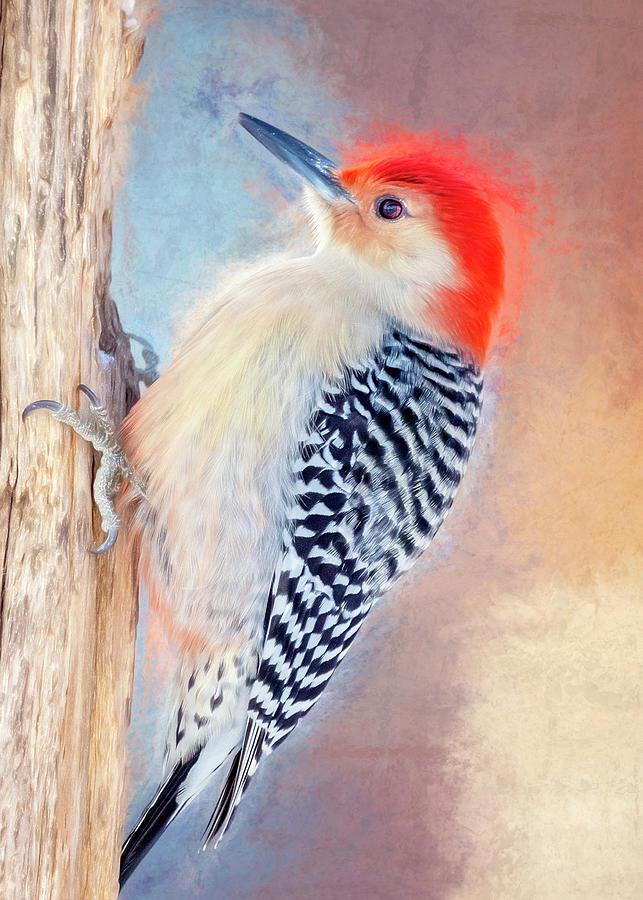Woodpecker Photograph - I Dreamt Of A Woodpecker by Bill Tiepelman