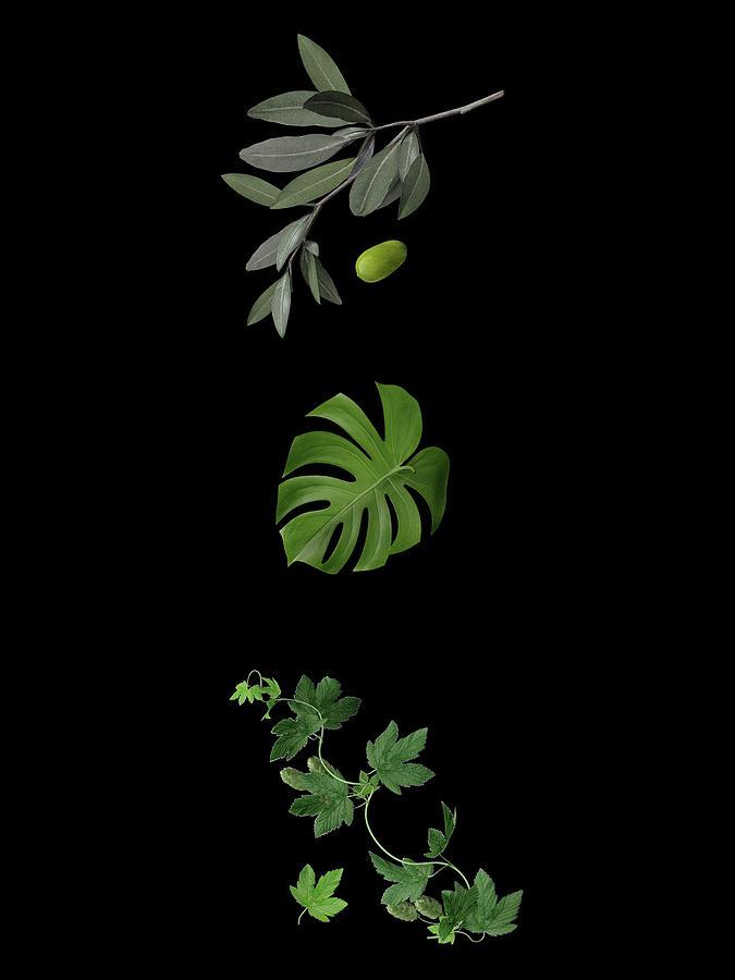 I Love Green Leaves Photograph
