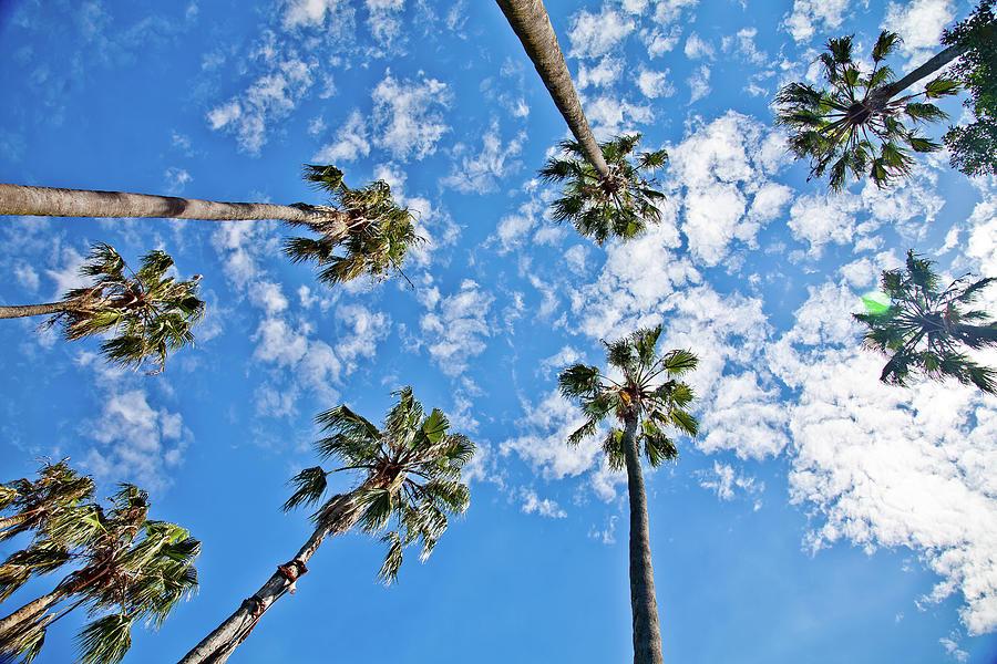 I Wanna Touch The Sky Photograph