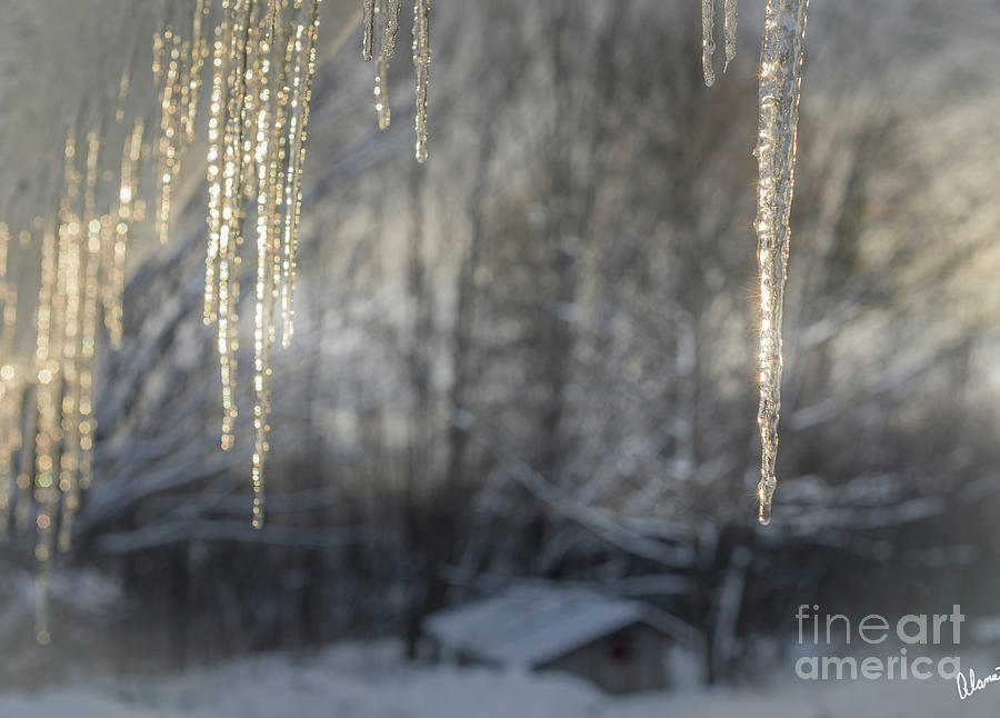 Ice Icicles and Chicken Coop by Alana Ranney
