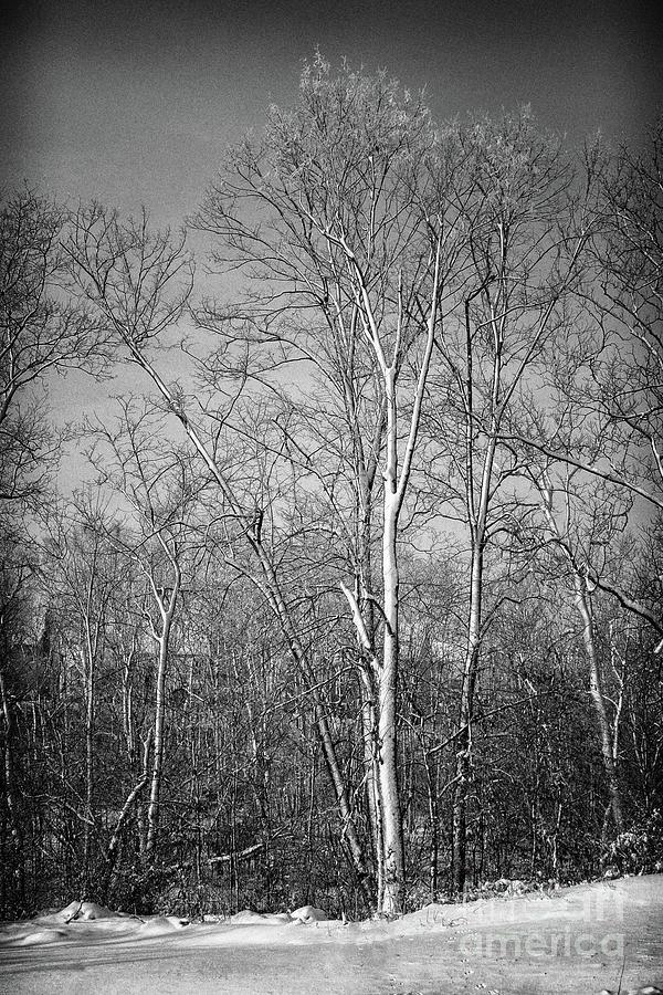 Landscape Photograph - Ice Storm by Karen Adams