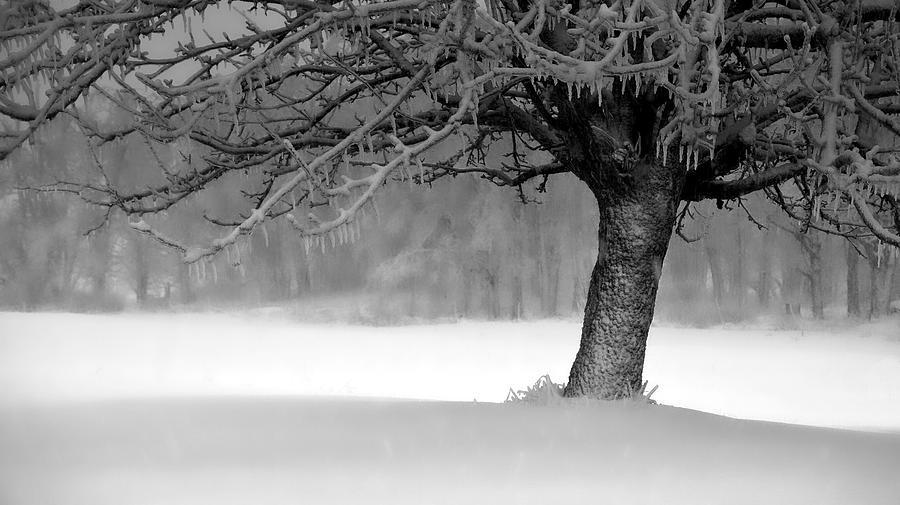 Ice Tree by Bryan Smith