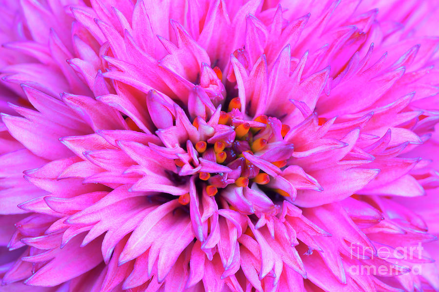 Abstract Photograph - Icy Pink Flames by Steven Dillon