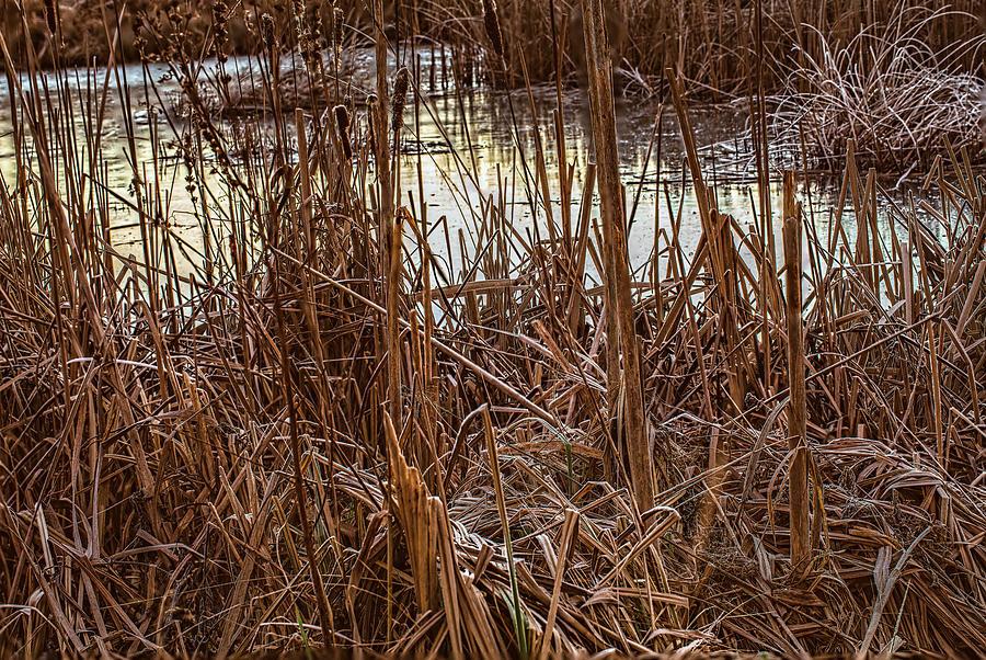 Icy Pond #j4 Photograph