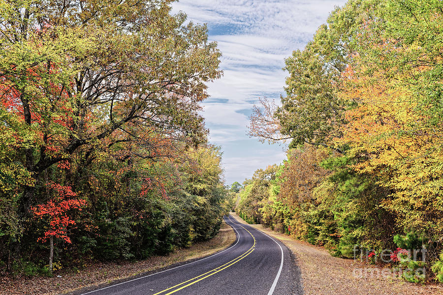 Idyllic Drive through Fall Colors in the Piney Woods of East Texas -  Marietta Cass County by Silvio Ligutti
