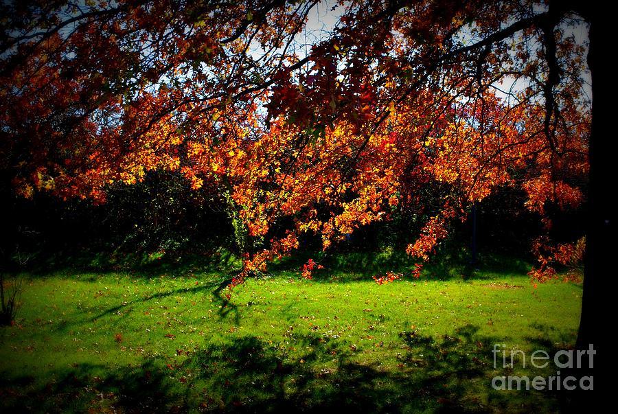 Illuminated Golden Autumn Leaves Photograph