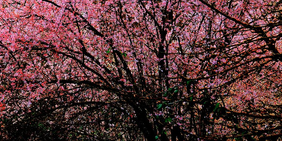 Immersed In Blossoms Photograph