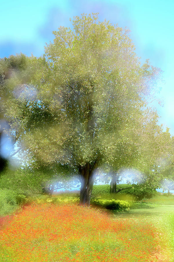 an Impression of a Tree Photograph