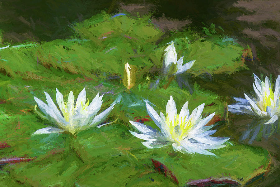 Impressions Of Water Lillies Mixed Media