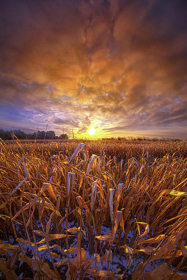 In All the Lives We Ever Lived by Phil Koch