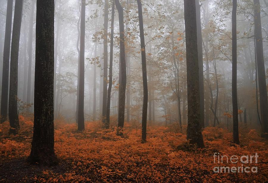 In Foggy Stillness Photograph