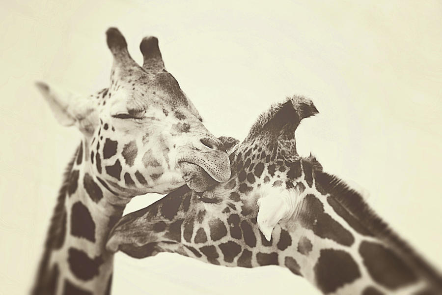 Sepia Photograph - In Love by Carrie Ann Grippo-Pike
