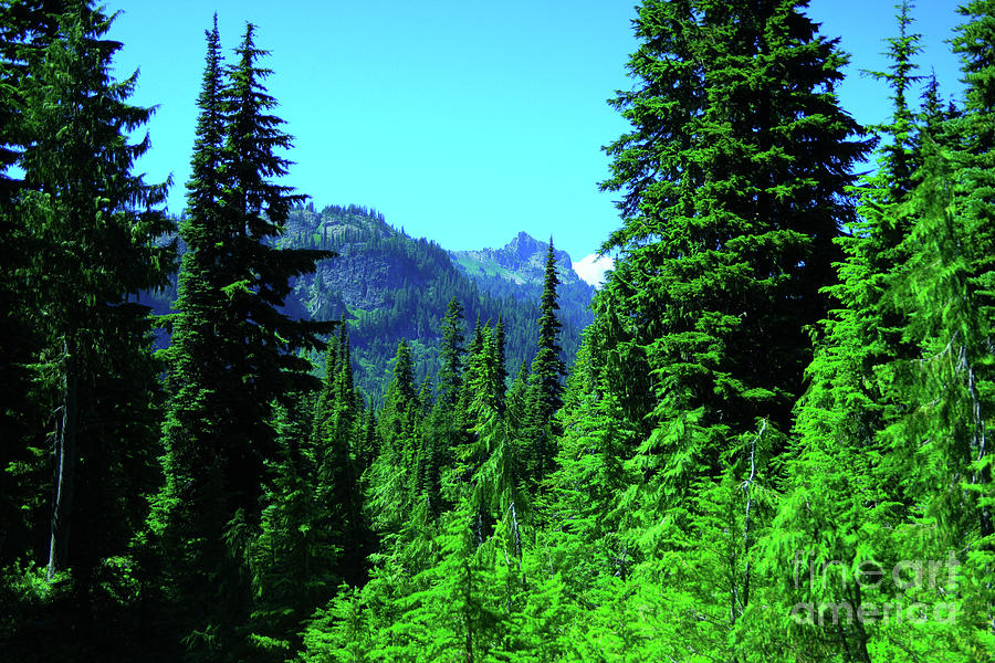 Landscape Photograph - In The Cascades  by Jeff Swan