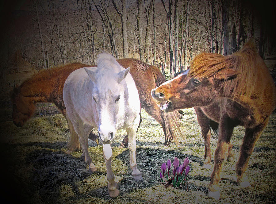 In The Field With The Wild Crocus Is The Alpha Mare Digital Art