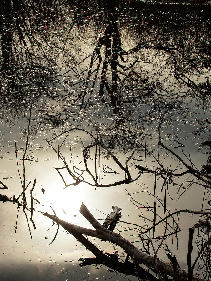 In the Swamp by Bob Cournoyer