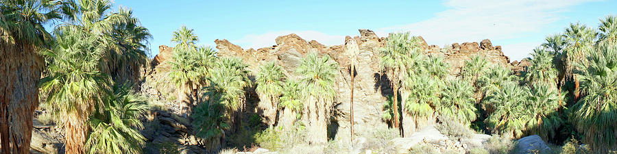 Desert Photograph - Indian Canyons in Palm Springs, CA by Frick and Hammons