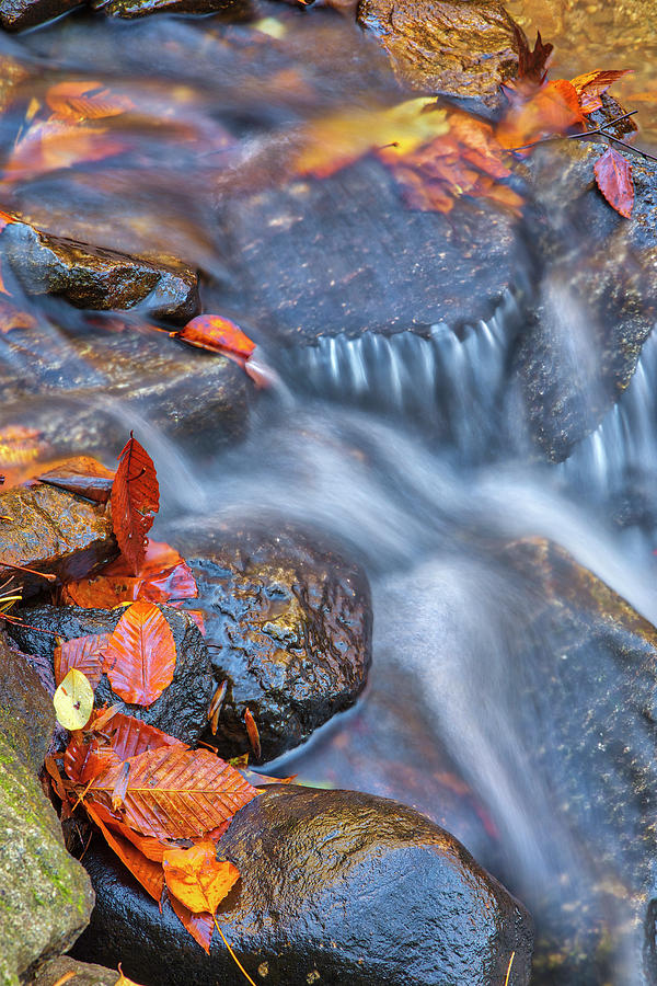 Indian Hole Brook by Juergen Roth