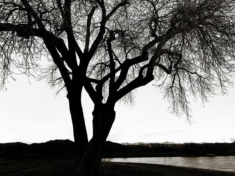 Intimate Tree Photograph