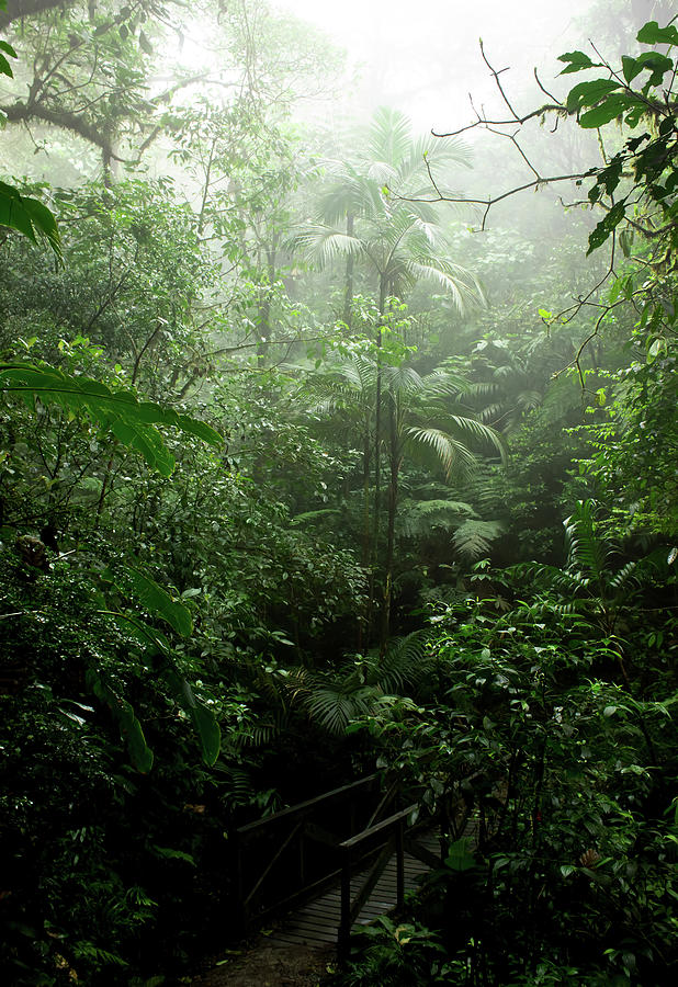 Rainforest Photograph - Into The Cloud Forest by Nicklas Gustafsson